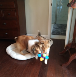 Bruno and friend playing in the bedroom.JPG
